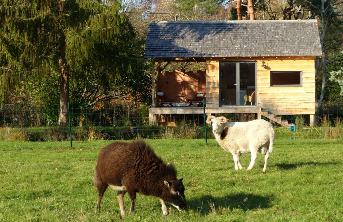La cabane et ses moutons